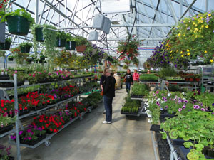 Genial Welcome To White Rock Nursery In Haines, Alaska. Browse Through Our Online  Store Or Simply Get In Touch If You Have Any Questions.